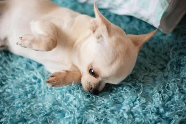 Santa Fe Carpet Cleaners - Pet Stain and Odor Removal Service Page